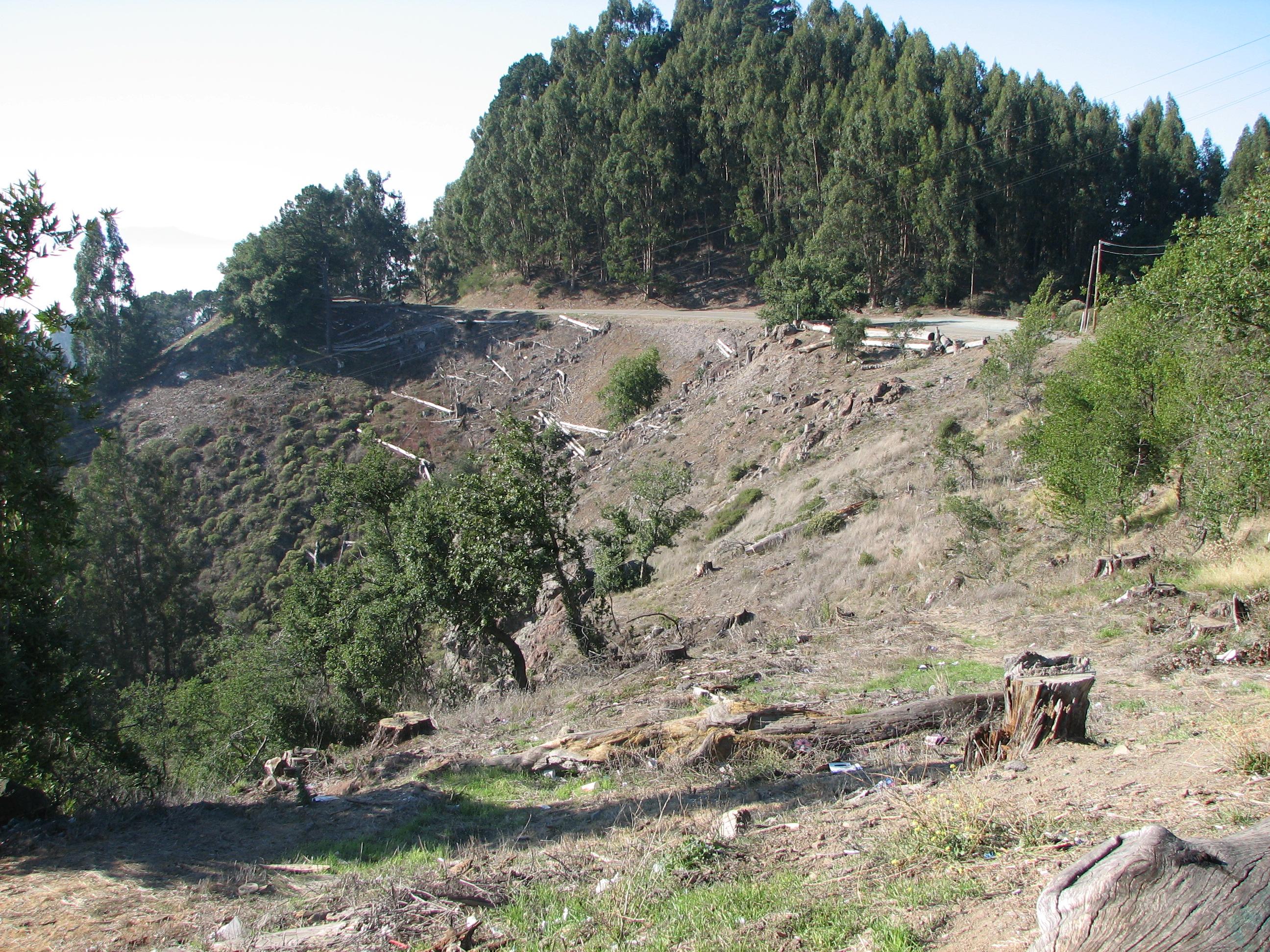 Death of a million trees saving trees from needless destruction in uc berkeleys fandeluxe Gallery