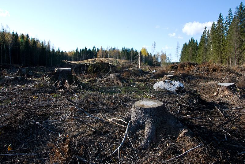 disadvantages of cutting forests However, there's another agricultural sector cutting deep into the forest which we' re also going to tackle: cattle ranching to assess the scale of.