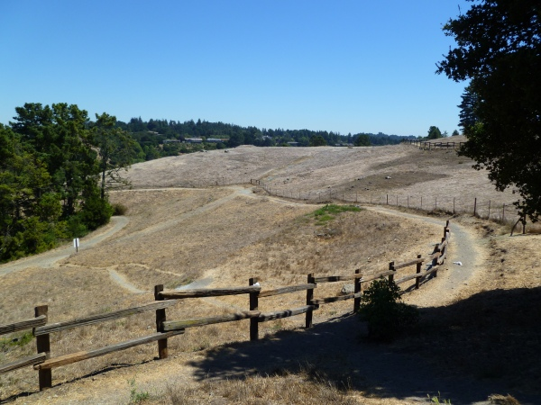 Serpentine Prairie restoration.  East Bay Regional Park District