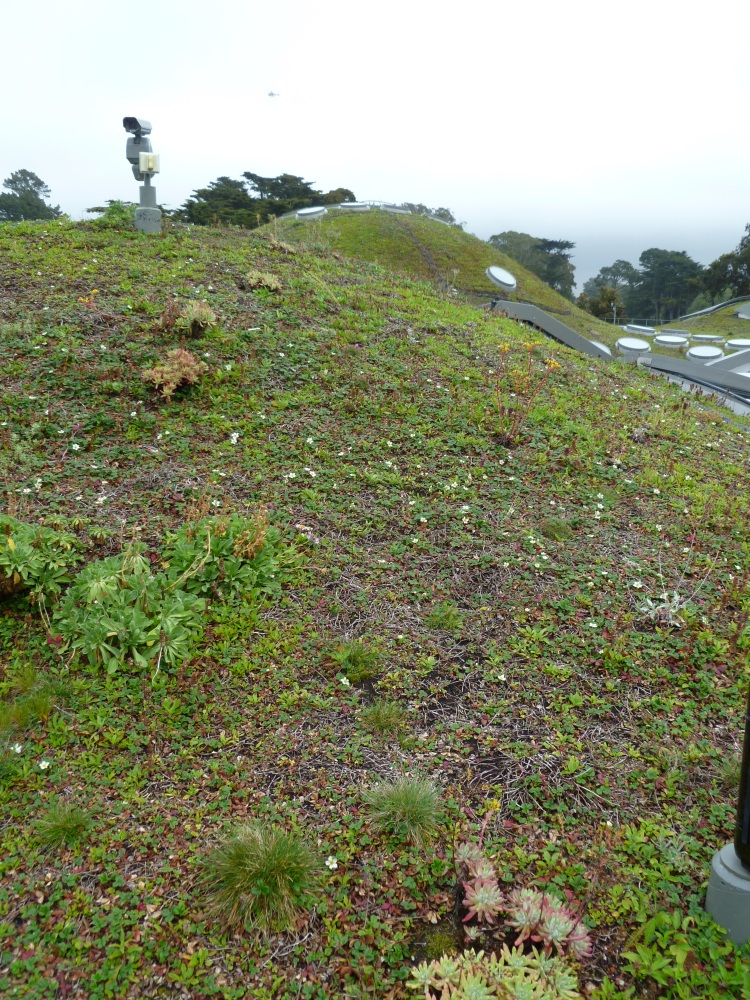 The Living Roof:  A failed experiment in native plant gardening (1/2)