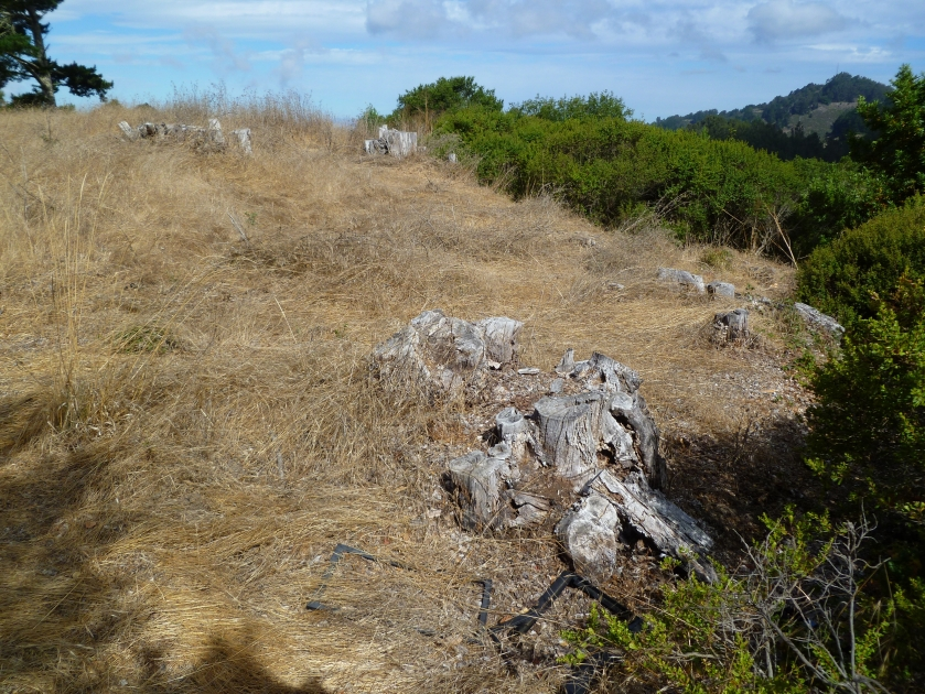 Trees were destroyed here by UC Berkeley over 10 years ago. The landscape is now non-native annual grasses. This is the typical outcome of tree removals on sunny hills without a water source.
