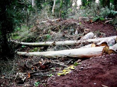 Interior Greenbelt Natural Area, 2010. Courtesy SaveSuro