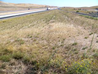 "Dunnigan Test Plot, August 2011. The result of an eight-year effort to restore native grassland. Does it look ""biodiverse?"" ecoseed.com."
