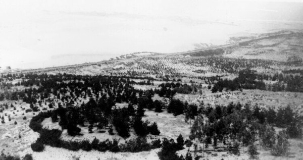 Golden Gate Park in 1880.  The trees are about 10 years old.  In the distance, looking south, we see the sand dunes of the Sunset District.  That's what most of Golden Gate Park looked like before the trees were planted.