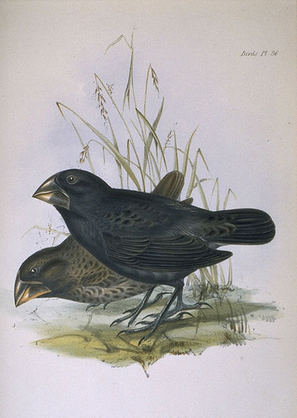 Darwin's Finches:  An opportunity to observe evolution in action (3/3)