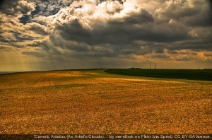 Cornfield.  Creative Commons
