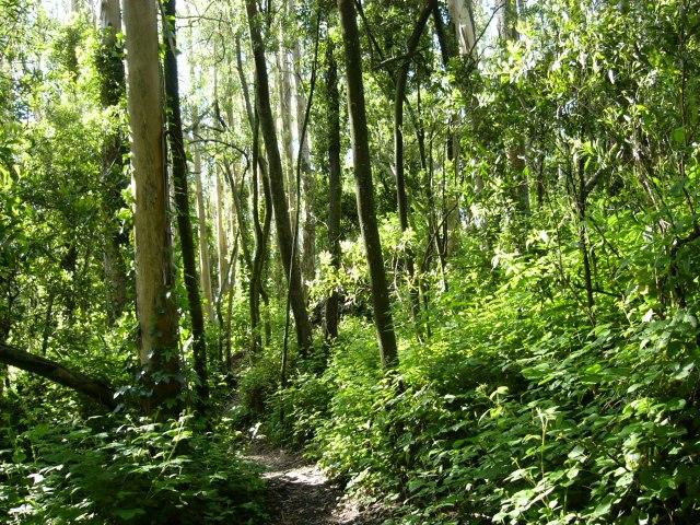 Biodiversity of the eucalyptus forest (1/4)