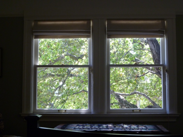 The view from my bed:  Coast Live Oak