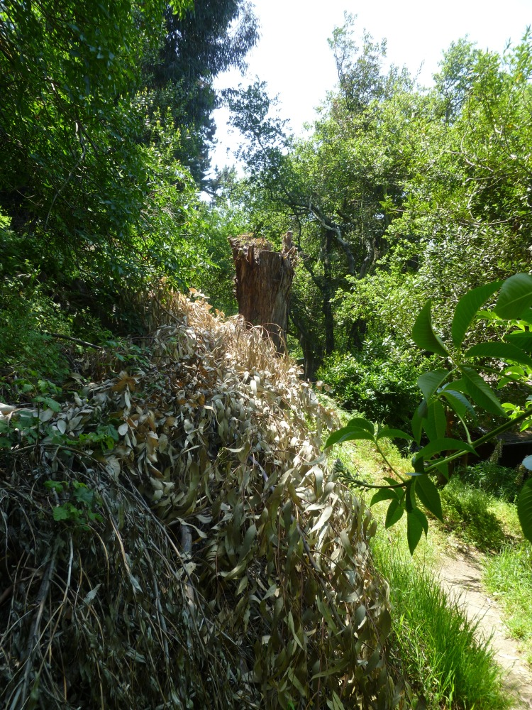 Vandalism by native plant advocates spreads to the East Bay (5/5)