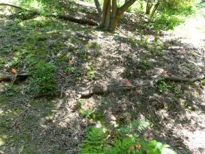 """Garber Park native plant """"restoration"""""""