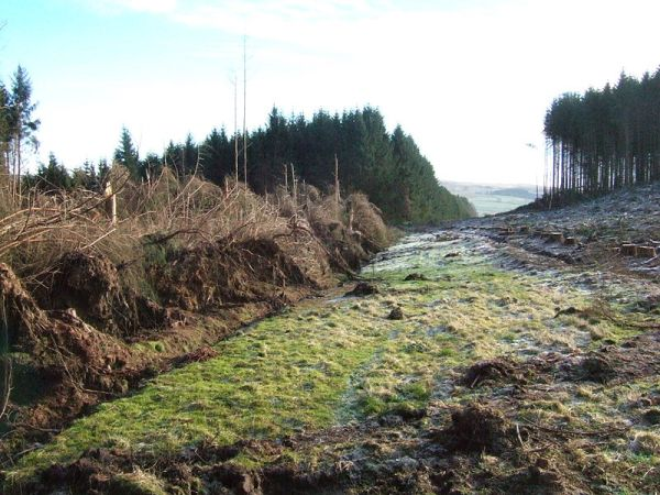 Wndthrow caused by adjacent clearcut, Britain.  Creative Commons