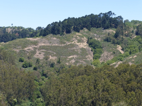 Above and below the middle ground are trees that will be destroyed by the FEMA project.  The middle ground is a preview of the landscape these projects hope to achieve.   Photo taken from Skyline Blvd, south of Claremont Blvd, looking north to Frowning Ridge.