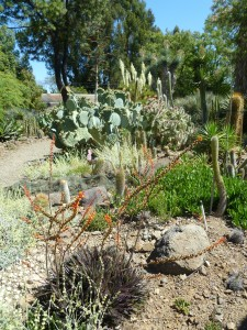 Ruth Bancroft Garden is a mix of native and non-native plants