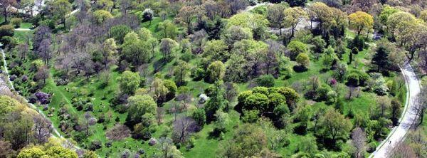 Harvard Arboretum