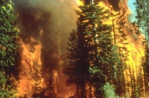 Wildfire in California, 2008.  BLM photo.