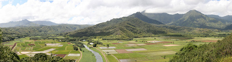 These small farms are being replaced by huge fields of corn and soya.  Kauia, Hawaii