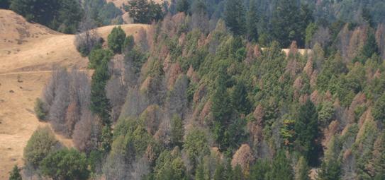 SOD mortality - Sonoma County