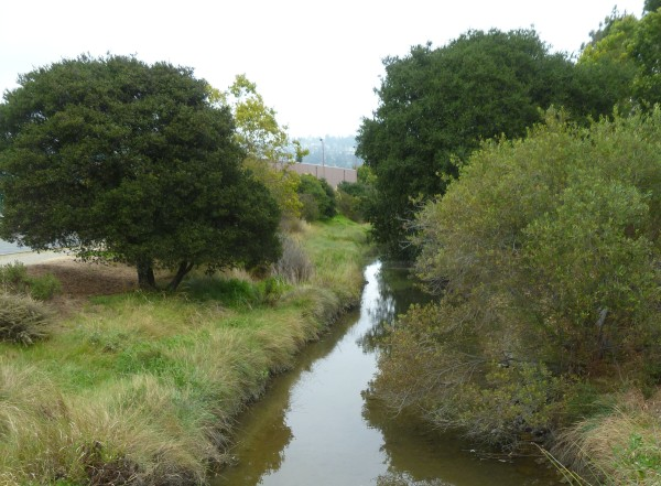 Cerritos Creek.  Not one of the creeks in the study, but typical of an East Bay creek with native vegetation.