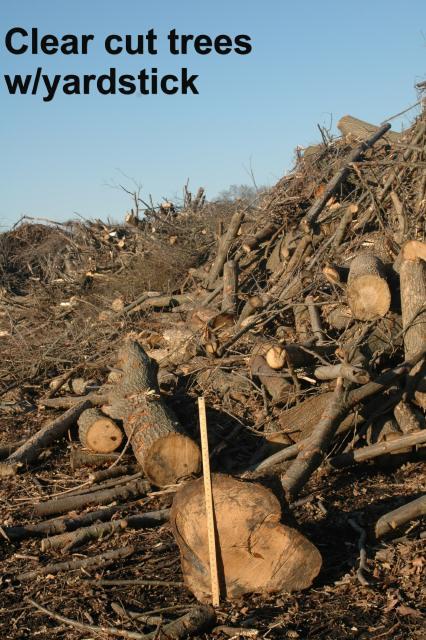 "Trees destroyed in Chicago for prairie ""restoration"""