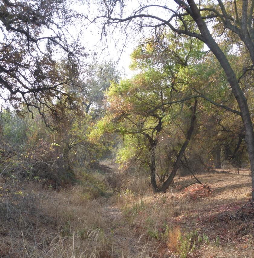 Kaweah  Oaks2