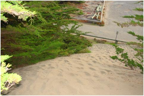 Cutting edge of Parking Lot Tsunami burying cypress trees at South Salmon parking lot entrance