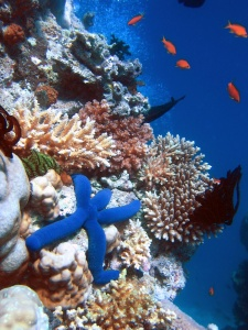 Coral reef. Creative Commons - Share Alike