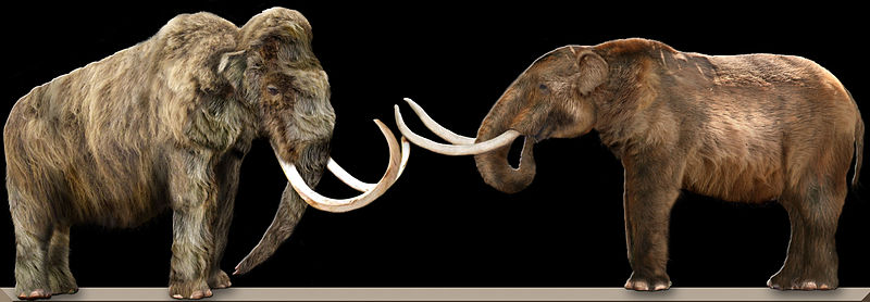 Eurasian Mammoth on left; American Mastodon on right. Creative Commons -dantheman9758
