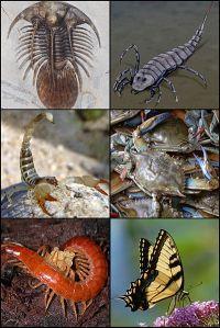 Arthropods - Creative Commons Share Alike