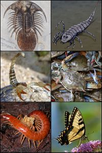 Arthropods - Creative Commons Share Alike