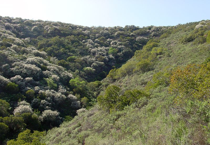 Coastal sage scrub in Southern California - Creative Commons Share Alike