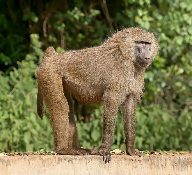 The Monkey's Voyage:  How plants and animals are dispersed throughout our planet (5/6)