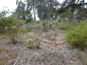 Irrigated native plant garden, Sweet Springs Nature Reserve