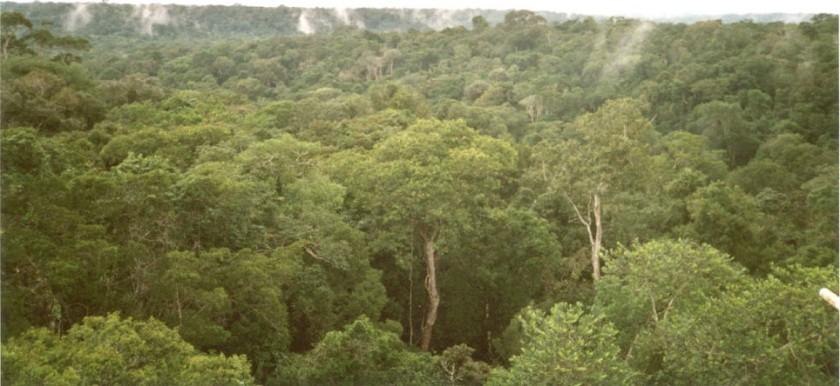 Amazon rainforest.  Creative Commons - Share Alike
