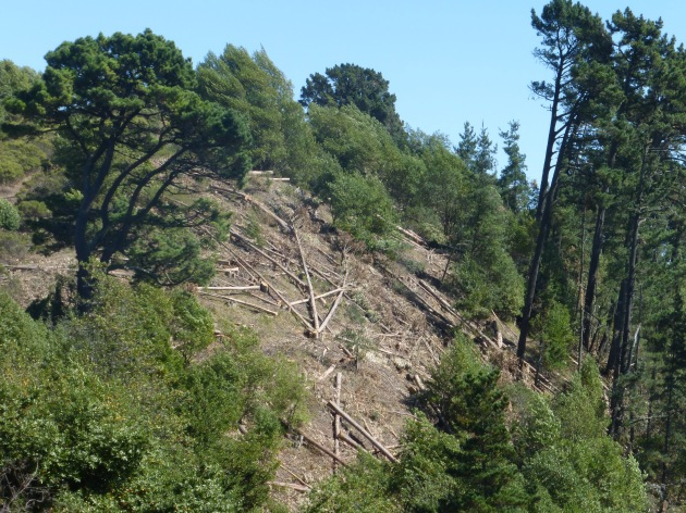 UC Berkeley destroyed hundreds of trees on Frowning Ridge in August 2014, before the Environmental Impact Statement was complete.
