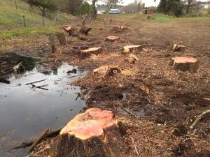 Flood Creek 1