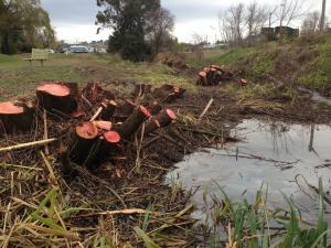 Flood Creek 3
