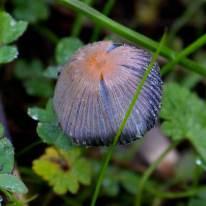 mushrooms SFFA 3