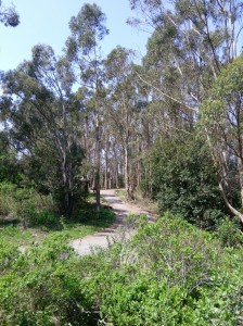 Round Top Trail, Sibley, East Bay Regional Park District