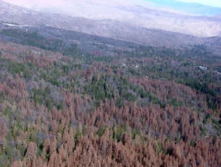 Dead trees in San Bernardino County, California