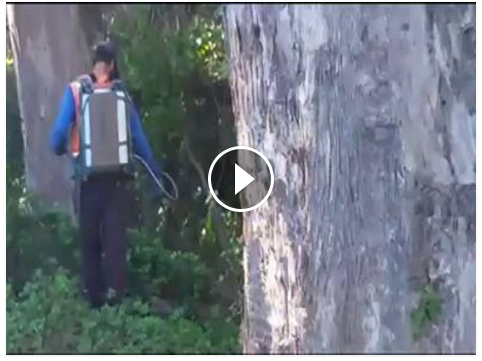 glyphosate spraying on Mt Davidson - nov 19, 2015