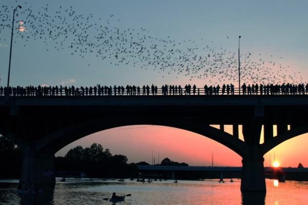 Bats departing from Congress Ave Bridge, Austin Texac