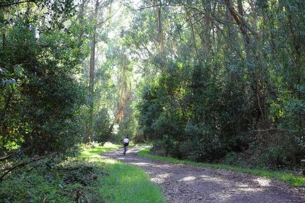 Tilden Park, Berkeley. Courtesy Save the East Bay Hills