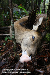 Deer poisoned by 1080. Graff Brothers, New Zealand