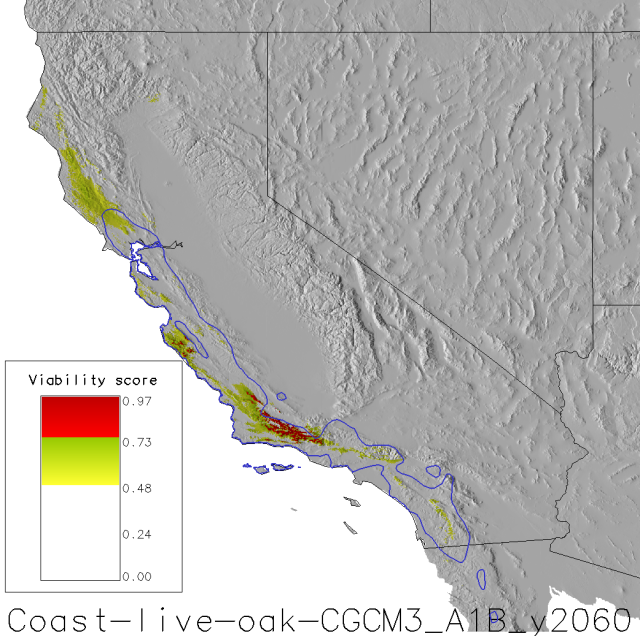 coast-live-oak-2060