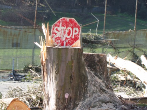 stop-destroying-trees